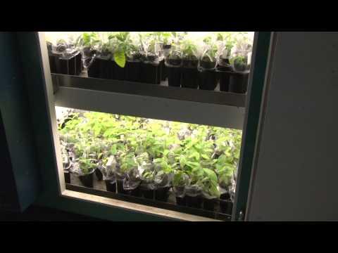 Ballinger  SUNY ESF grows Chestnut trees
