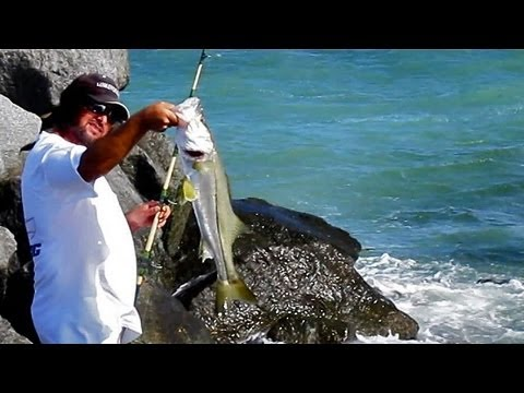 how to hook snook for live bait