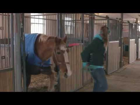 Gentle Giants Draft Horse Rescue