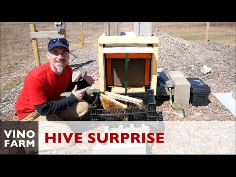Finally Spring - This Hive is ALIVE!