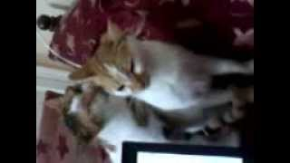 [My cat take a shower by her mother] Video