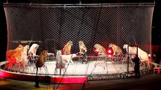 Tigers at Ringling Bros  and Barnum & Bailey Circus April 2, 2016