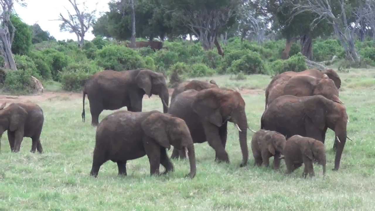 Baby elephants playing, very cute funny!!!! African Safari ...
