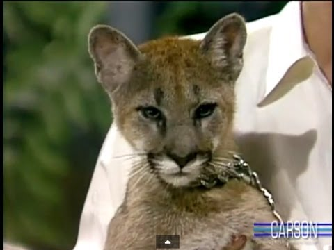 Baby Mountain Lion Stares Down Johnny Carson, Apr 1986, Part 3