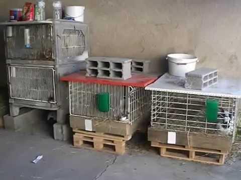 Les lapins #1: Comment commencer l'élevage de lapin