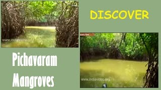Kandal Forest Chennai Tamilnadu