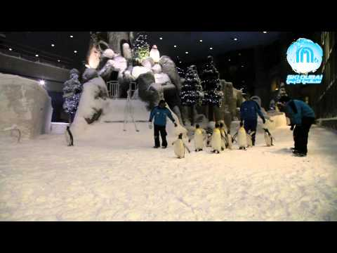 Ski Dubai Penguins: Daily exercise fun