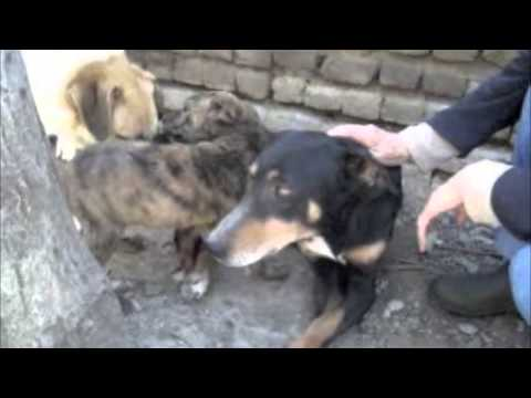 Vafa Shelter Dogs -Soheil & Bamdad with friends - Hashtgerd, Iran