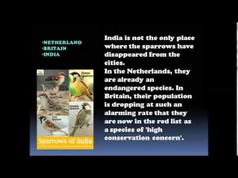 Slogans On Save Birds