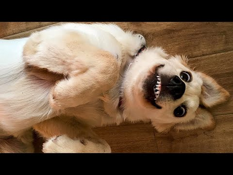 Funniest Dogs and Cats - Pet Life!