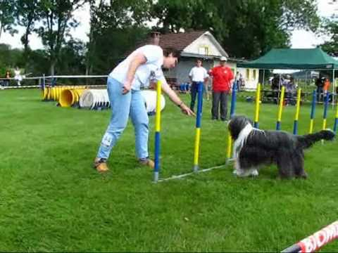 Concours agility dog