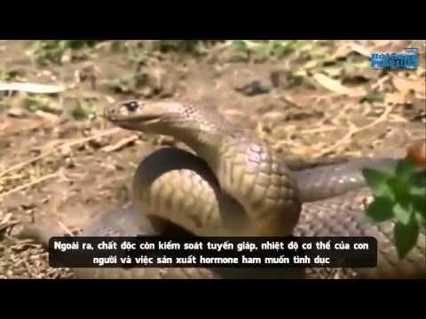 Kinh hãi loài rắn cắn