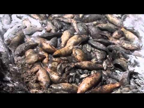 Mueren miles de peces en presa de Mexquitic