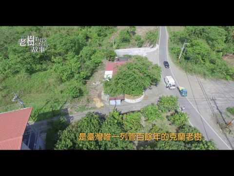 高雄市8棵百年老樹故事-克蘭樹(影片長度:4分45秒)