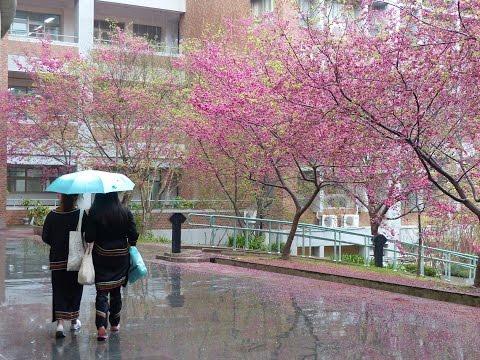 Mùa hoa anh đào 2016: Từ Tokyo tới Washington DC
