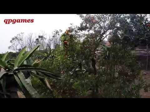 Quất Cảnh Tự Nhiên - Cây Nhà Lá Vườn l Xuân Ất Mùi 2015
