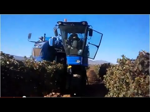 New holland VL 620 vendimiando viñas en espaldera
