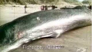 La ballena que explotó