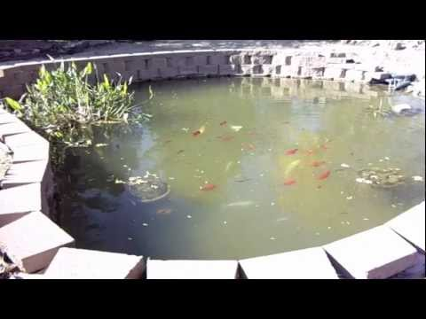 for 1500 gallon koi pond
