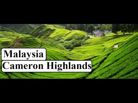 Beautiful Cameron Highlands/Malaysia Part 1