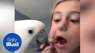 Keď si vták myslí, že je zubár