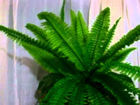 Flores y plantas artificiales youtube for Plantas ornamentales artificiales