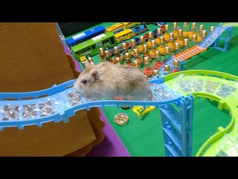 My Funny Pet Hamster in Amusement Park Obstacle Course