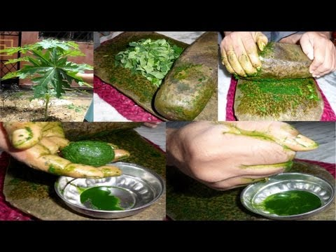 Preparation of Papaya leaf juice for curing dengue fever