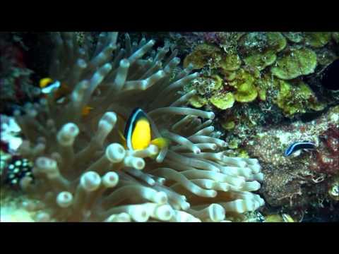 Diving in Bahrain (Abu Thalma) filmed by Ali Aman.