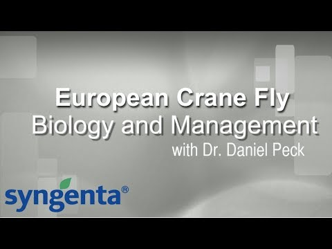 European Crane Fly - Biology and Management with Dr. Daniel Peck sponsored by Syngenta