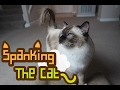 WATCH Spanking The Cat WARNING It s Very Naughty
