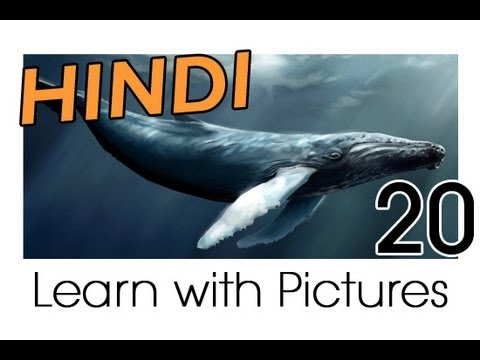 Learn Hindi Vocabulary with Pictures - Marine Animals