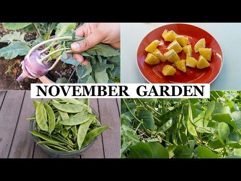 The California Garden In November - Winter Garden Preparation & Harvests