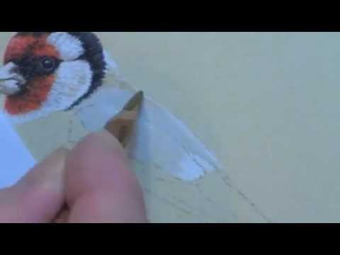European Goldfinch Speed Painting