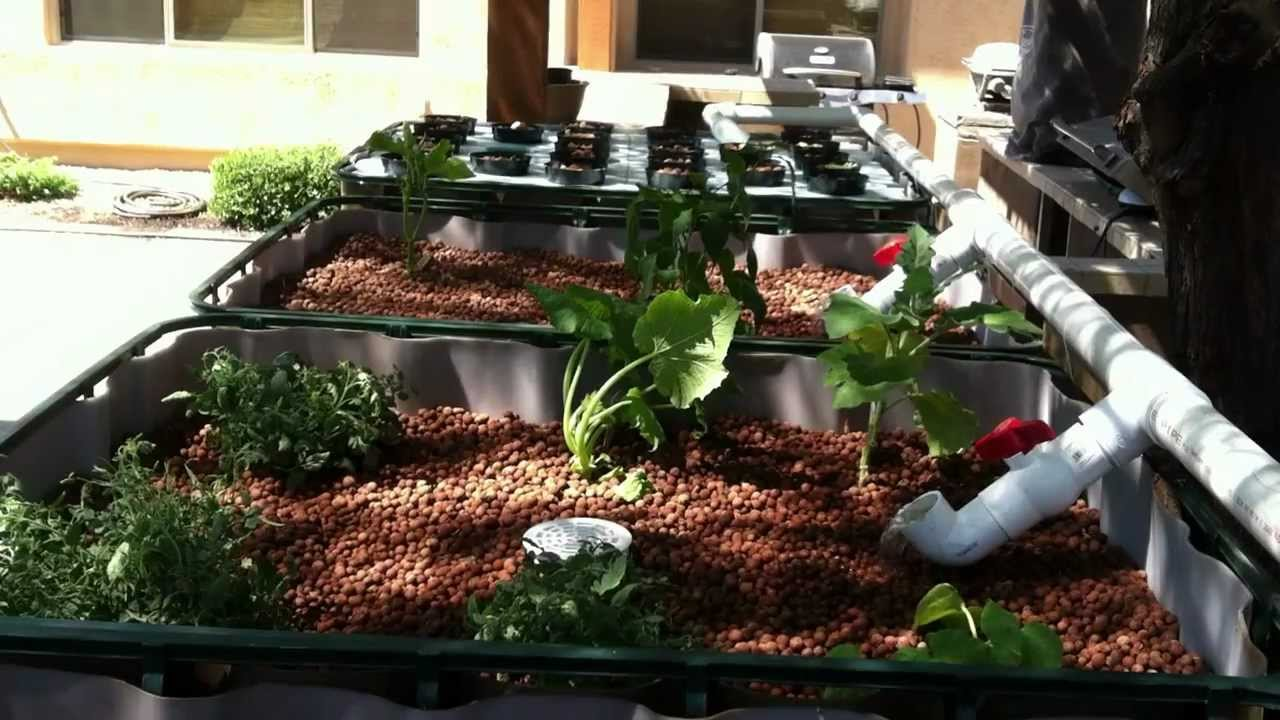Aquaponics in arizona pt 2 the bell siphon youtube for Arizona aquaponics