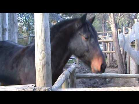 SALUDO DE CABALLO - FUNNY ANIMAL BLOOPERS - CHASCARROS DE ANIMALES