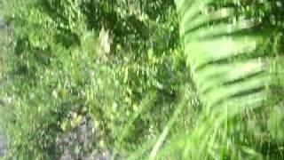 Porn In Jungle