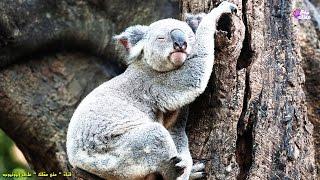 أكثر 10 حيوانات نوماً على سطح الأرض  