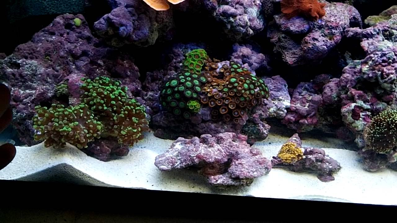How To Setup Simple Cheap Reef Tank Youtube