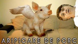 DANI pe NET -  Aripioare de Porc