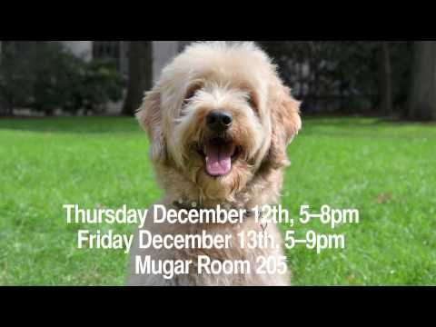B.O.N.E.S Therapy Dogs Come to Mugar on December 12th and 13th, 2013