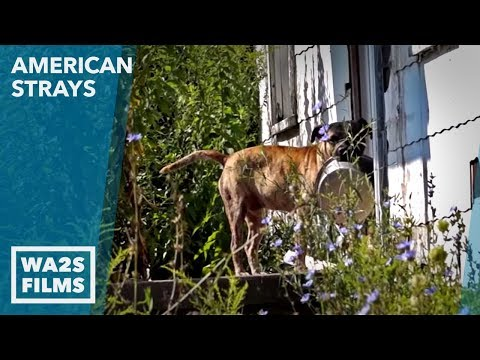 Stray Dog in Abandoned House in Detroit Just Wants Food - Stray Proud American Strays