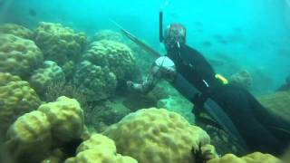 Spearfishing REEF HUNTING