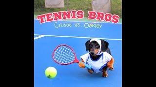 Partido de tenis entre perros
