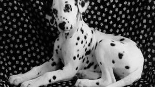 Los perros mas bonitos del mundo