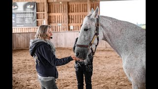 Ausbildung zum pferdegestützten Coach