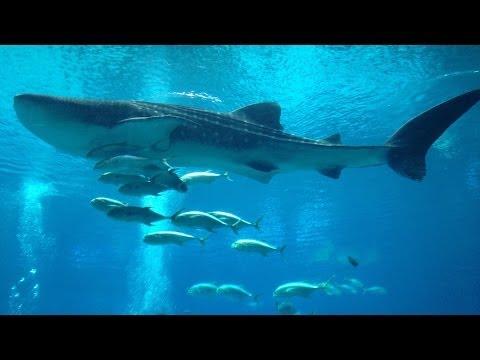 Georgia Aquarium 2014 [HD]