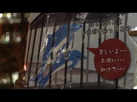 Activists rally in Tokyo against dolphin hunting in Japan