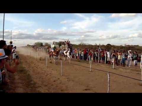 Cavalo Quarto de Milha Ferrari