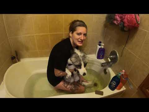 Fox grooming and bathing